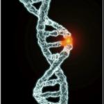 kisirlik-ve-genetik