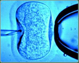 Tüp bebek aşamaları ve süreçleri